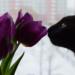 Thumbnail for Pet Poison Prevention Month